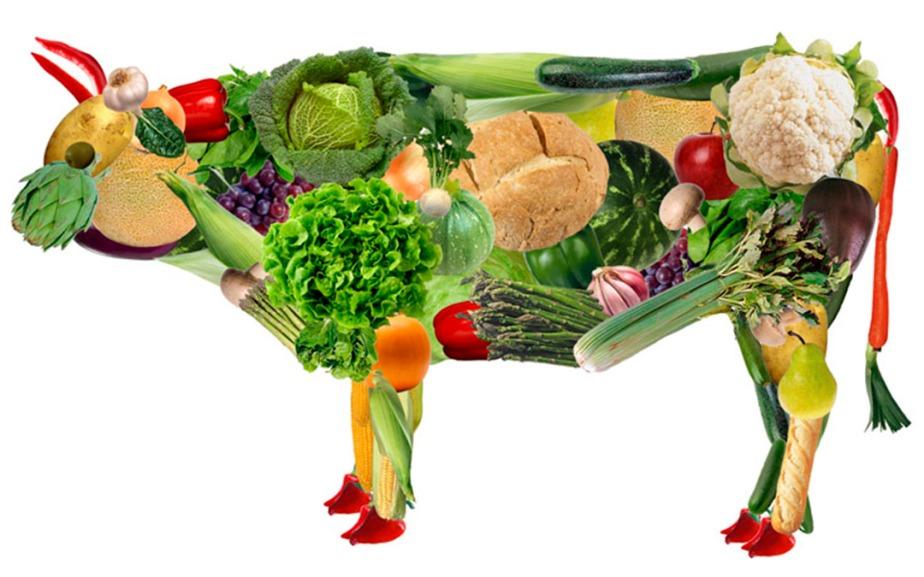 razoes-para-vegetarianismo